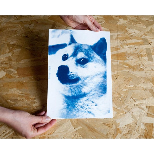 Limited Edition, Doge Meme! Wow! Much Cool! Cyanotype Print on Watercolor Paper For Sale - Image 4 of 4