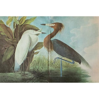 1966 Cottage Print of Purple Heron by John James Audubon For Sale