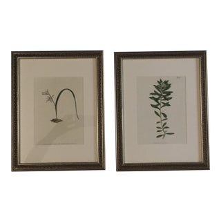 Framed 19th Centuy Hand-Colored Botanical Prints - a Pair For Sale