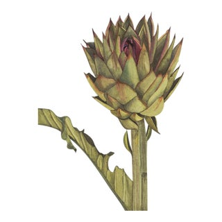 Contemporary Grey Cynara Scolymus Watercolor Print