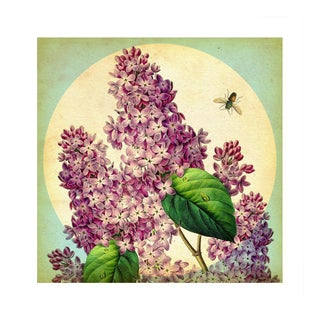 Antique 'May Lilacs' Archival Print