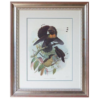 Birds of Paradise Ornithological Lithograph by Elliot For Sale