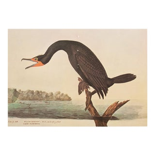 1966 XL Florida Cormorant by Audubon For Sale