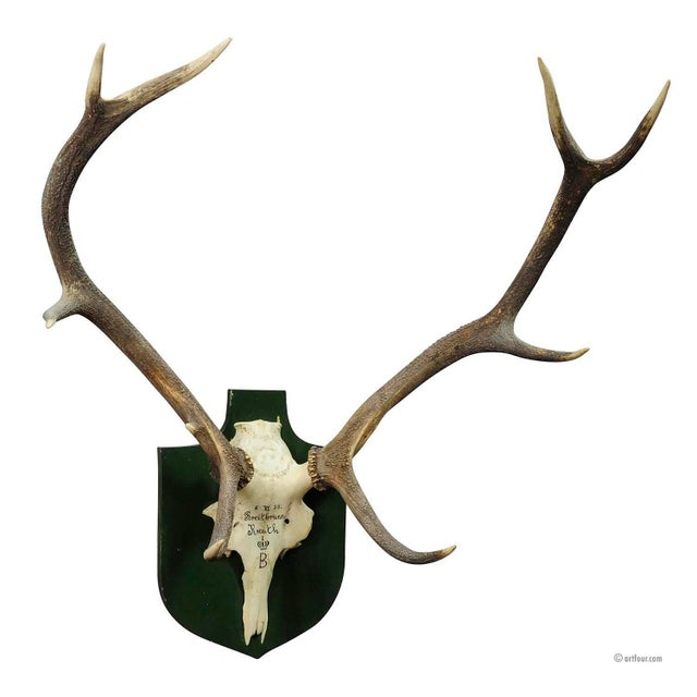 Large Black Forest Deer Trophy From Salem - Germany 1957 For Sale - Image 4 of 4