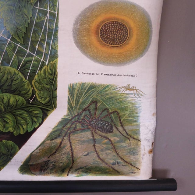 German Biology Chart of Spiders by Schroder Und Kull, 1910 For Sale In Los Angeles - Image 6 of 10
