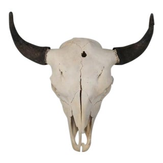 Large Bull Bison Skull For Sale