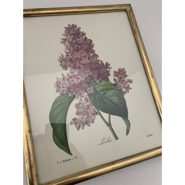 Reproduction Antique Botanical Print Lilac Framed For Sale - Image 4 of 12