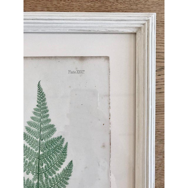 Arts & Crafts 19th Century Bradbury and Evans Nature Printed Fern Print For Sale - Image 3 of 7