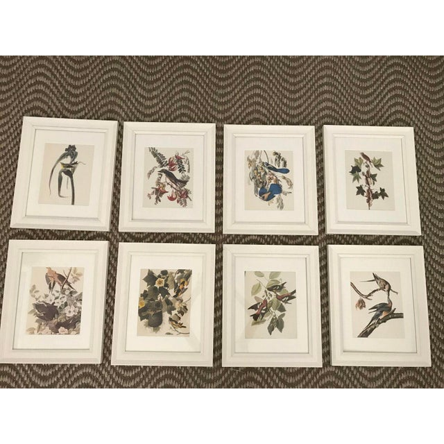 Framed Vintage Bird Prints - Set of 8 - Image 2 of 11