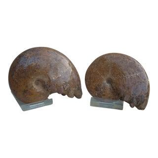 Orange Ammonite Fossils - A Pair For Sale