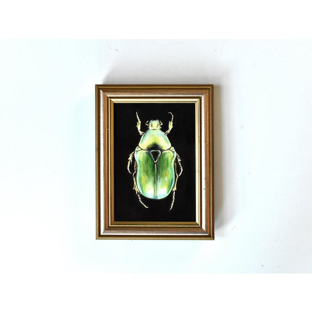 Contemporary Contemporary Oil Painting of a Beetle by Susannah Carson For Sale - Image 3 of 7