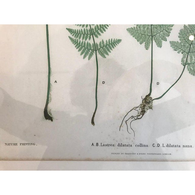 19th Century Bradbury and Evans Nature Printed Fern Print For Sale In Boston - Image 6 of 7