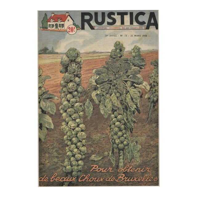 Matted French Mid-Century Country Kitchen Art-Vegetables-Brussels Sprouts For Sale