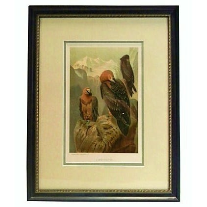 Prang 19th C. Chromolithograph of Vultures For Sale