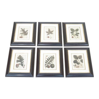 Set of 6 Trowbridge Custom Framed Botanical Prints For Sale