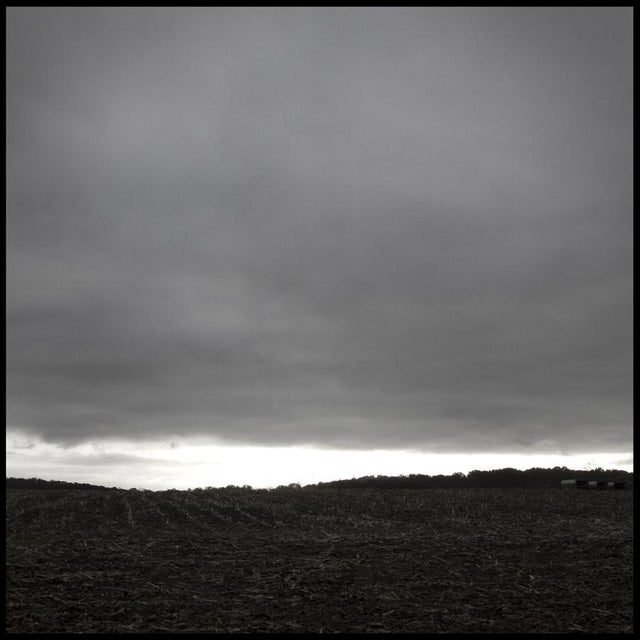Stephen Ciuccoli, 'Cornfield', 2012 For Sale