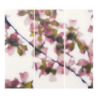 "Jeri Eisenberg ""Dogwood (Pink), No. 5"""