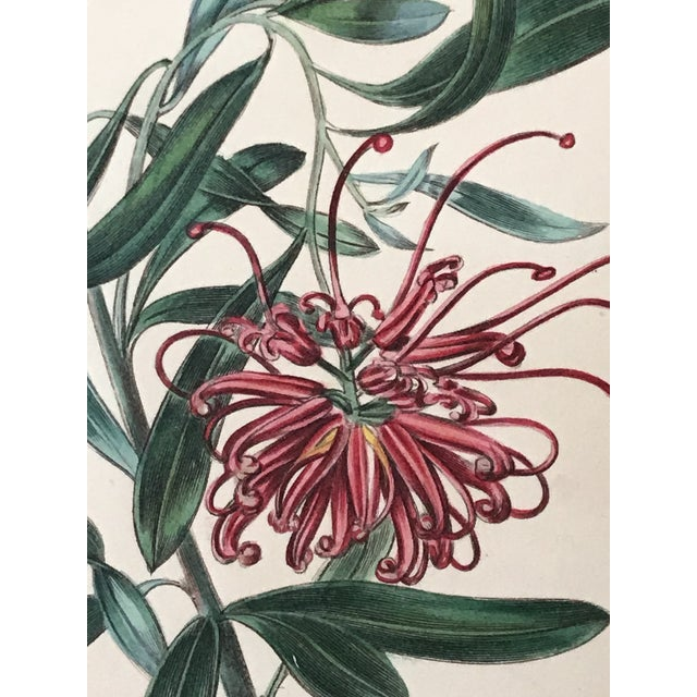 Late 19th Century Antique Floral Botanical Colored Etching 19th Century For Sale - Image 5 of 7