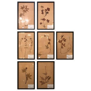 Set of Seven Framed Under Glass Botanicals For Sale