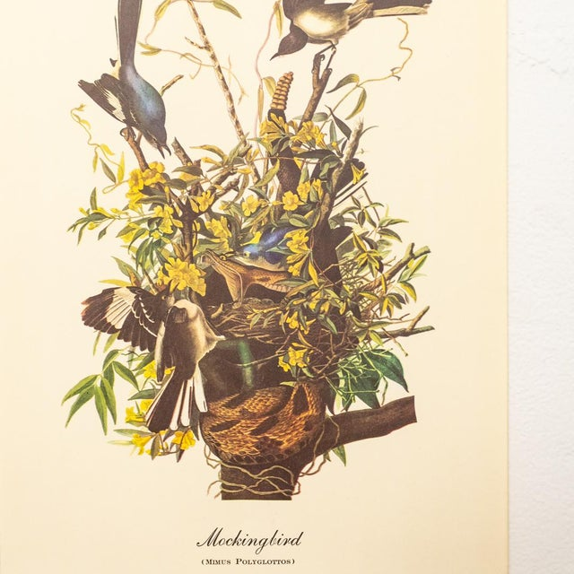 Blue 1960s Audubon Bird Prints | 17 Pc Gallery Collection For Sale - Image 8 of 13
