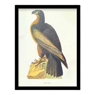 Custom Black Wood Frame of Authentic Vintage John James Audubon Bald Eagle Bird & Botanical Print For Sale