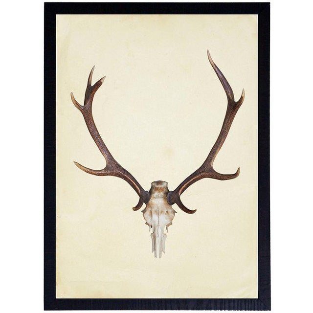 "Illustration Vertical Antlers - 17"" X 23"" For Sale - Image 3 of 3"