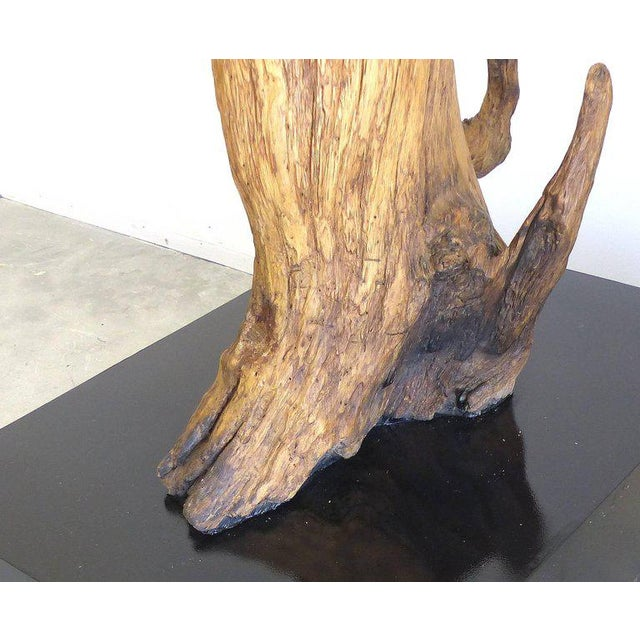 Wood Petrified Amazon Wood Sculpture by Contemporary Brazilian Artist Valeria Totti For Sale - Image 7 of 9