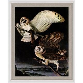 Audubon 5, Framed Artwork For Sale