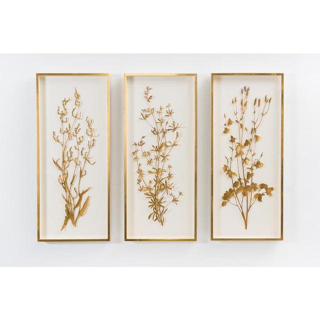 Sophie Coryndon, Illuminated Herbarium Triptych, Uk For Sale - Image 9 of 9