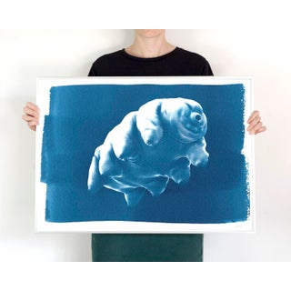 Handmade Cyanotype Print on Watercolor Paper /Tardigrade or Water Bear / 50x70cm / Cyanotype on Watercolor Paper / Limited Edition Preview