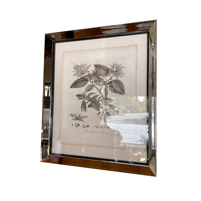19th Century Antique Botanical Prints - Set of Six For Sale - Image 5 of 8