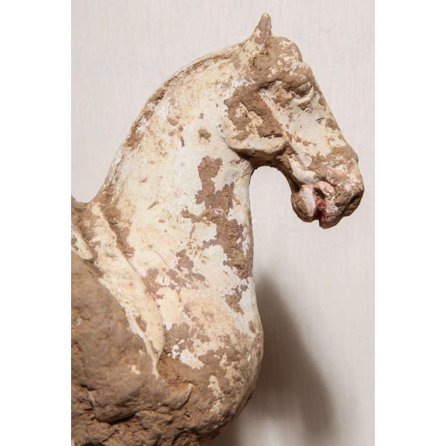 8th Century Tang Dynasty Chinese Terracotta Horse and Rider with Original Paint For Sale - Image 4 of 10