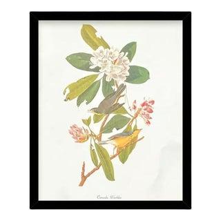 Custom Black Wood Frame of Authentic Vintage John James Audubon Canada Warbler Bird & Botanical Print For Sale