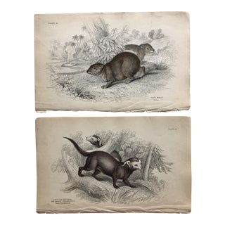 Mid 19th Century Antique Animal Lithographs - A Pair For Sale