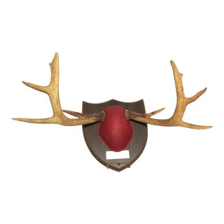 Cushion Mounted 10 Point Deer Antlers on Wood Shield For Sale