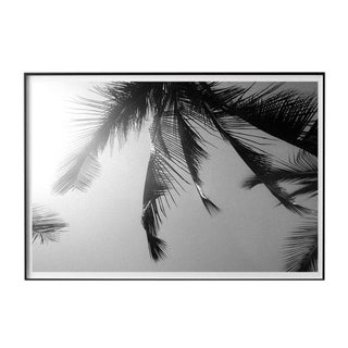"""""""Palm Frames #4"""" Unframed Photographic Print For Sale"""