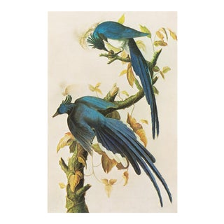 1960s Cottage Style Lithograph of a Columbia Jay by Audubon