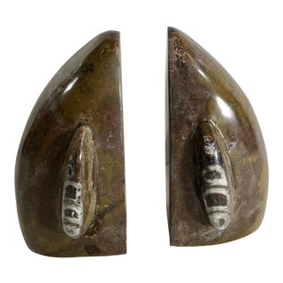 Traditional Orthoceras Fossil Stone Bookends - a Pair Paper Weights Old Collectible For Sale