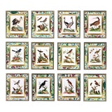 Image of C. 1740 George Edwards Engravings of Birds - Set of 12 For Sale
