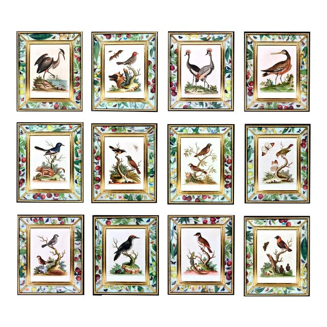 C. 1740 George Edwards Engravings of Birds - Set of 12 For Sale