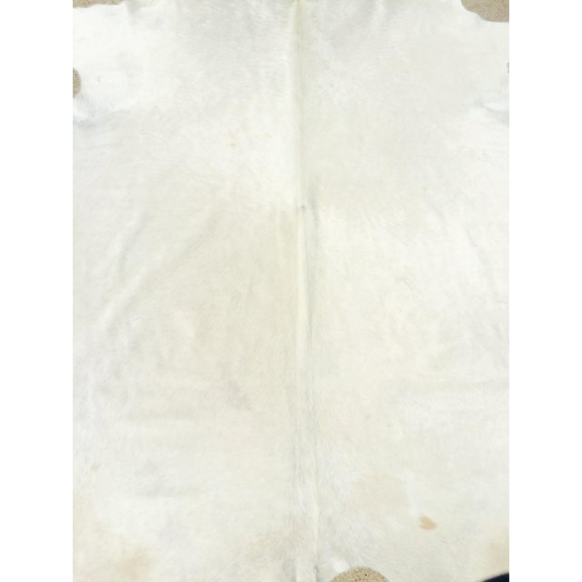 White Brazilian Cowhide Rug - 8″ × 8″ - Image 8 of 8