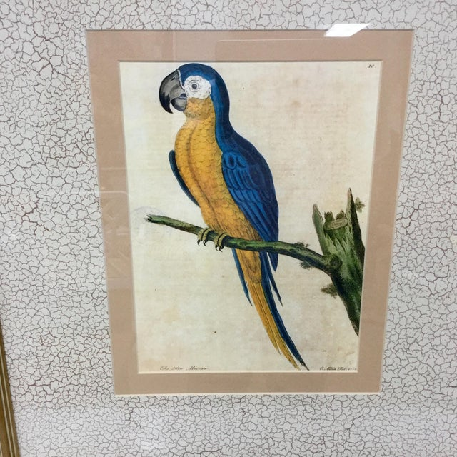 Vintage Framed Blue Macaw Lithograph Print For Sale In Tampa - Image 6 of 9