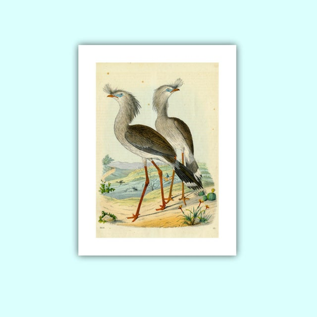 Antique '2 Silly Cranes' Archival Print - Image 3 of 4