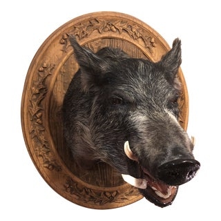 Vintage Mounted Taxidermy Boar's Head Mounted on Detailed Plaque For Sale