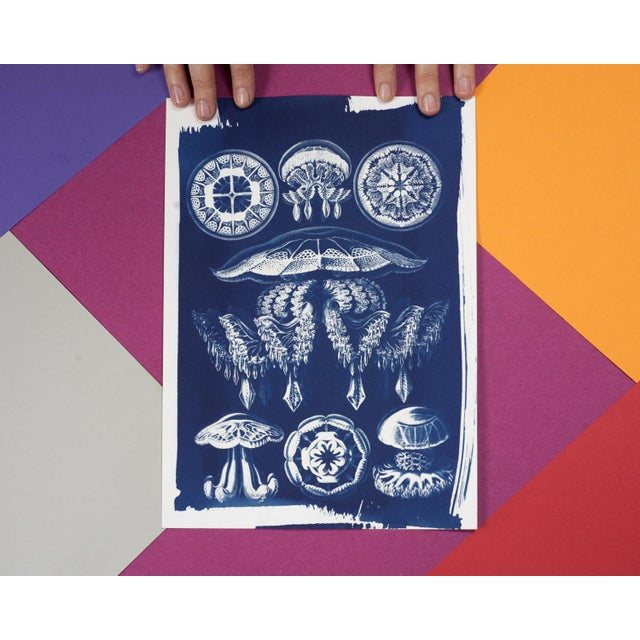 Jellyfish Anatomical Drawing by Ernst Haeckel, Cyanotype Print, A4 Size (Limited Edition) - Image 5 of 5