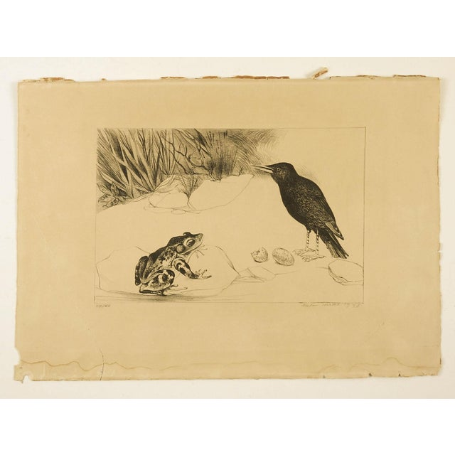1930s Black Bird & Frog Lithograph For Sale - Image 5 of 5