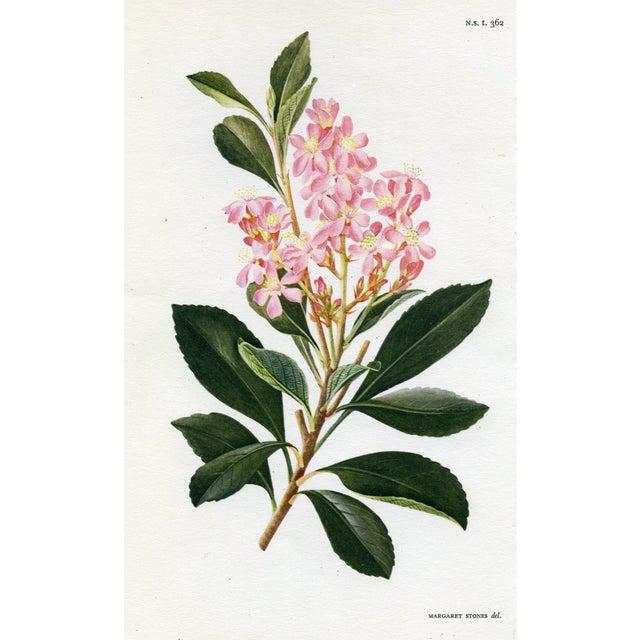 Vintage Curtis Botanical Prints - A Pair For Sale - Image 4 of 5