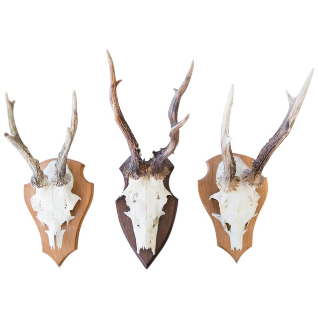 Mounted Roebuck Antlers For Sale