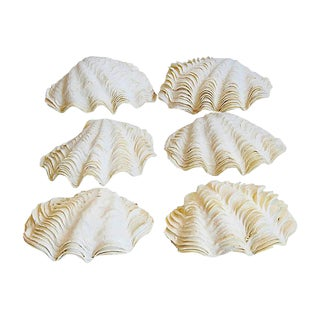 Natural Ruffled Edge Full Clamshells - Set of 3 Full Shells/6 Half Shells