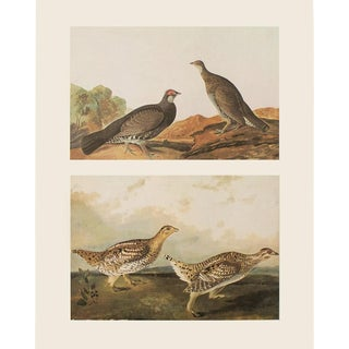 1966 Dusky Grous & Sharp-Tailed Grous by John James Audubon For Sale